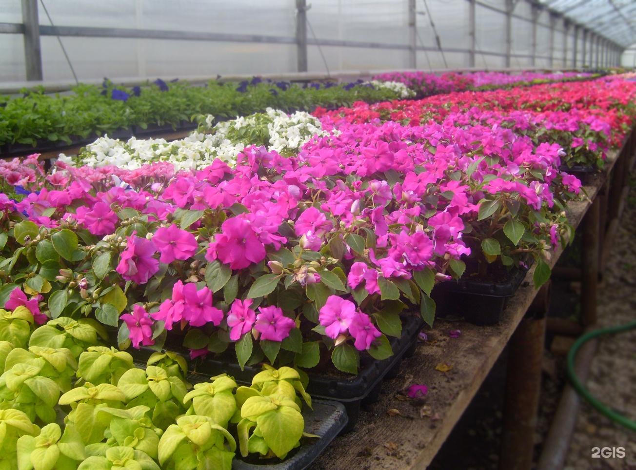 Как и когда сажать цветы на рассаду, чтобы украсить свой сад 78