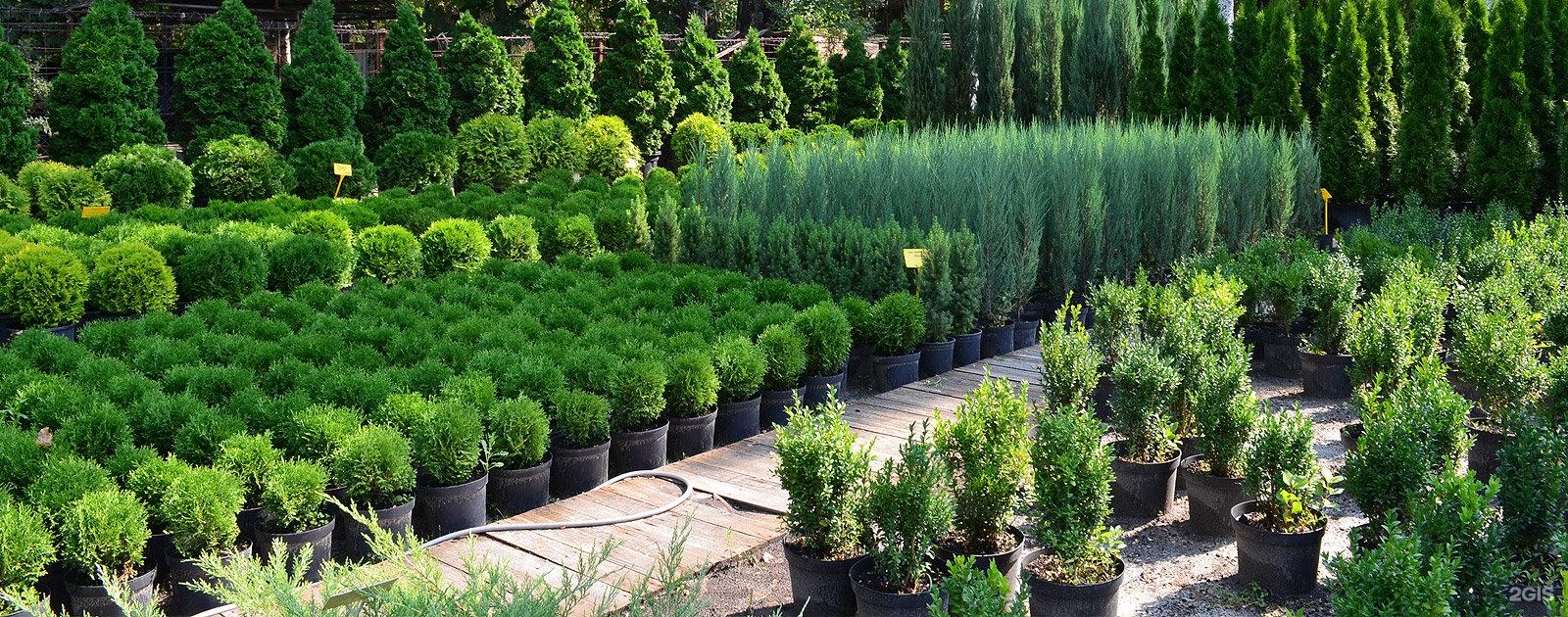 Как сделать питомник растений