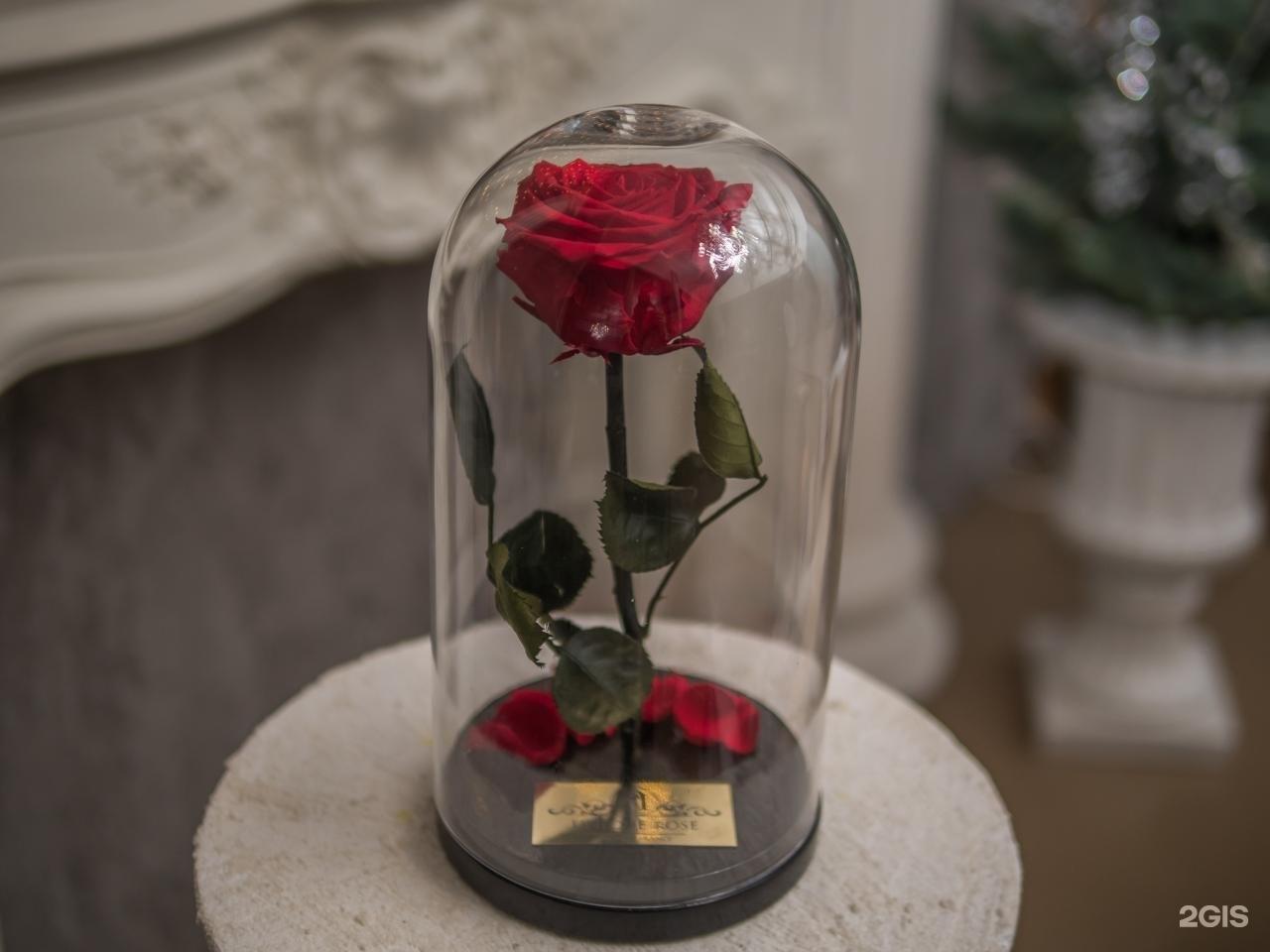 Роза под колпаком своими руками