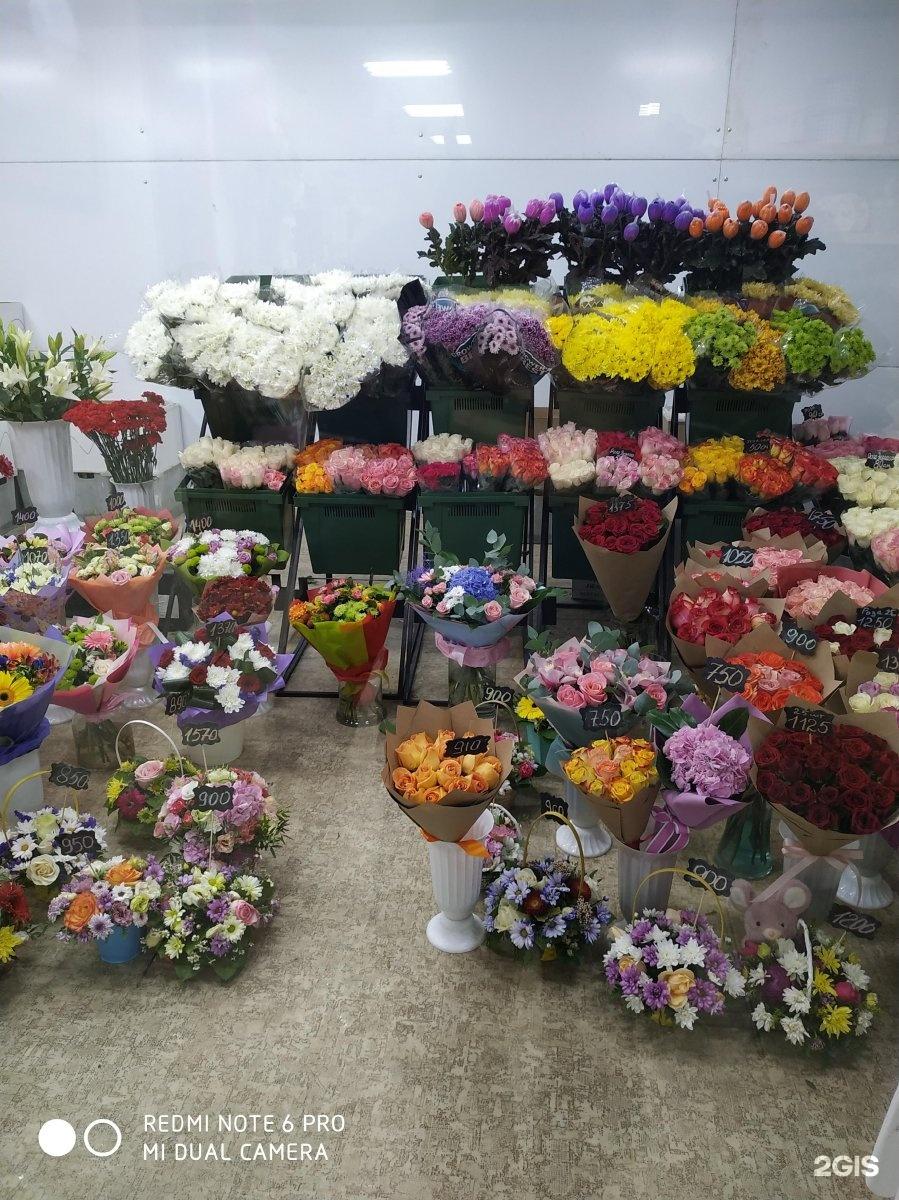 Германия купить, оптовые склады цветов днепропетровск